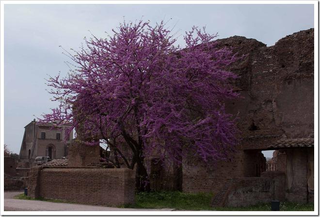 2009 04 08 Italy  _MG_3760
