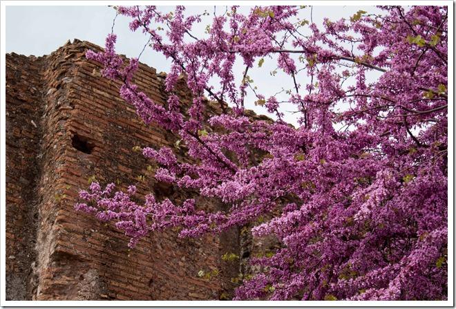 2009 04 08 Italy  _MG_3795