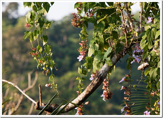 2010 03 16 13 38 Costa Rica_