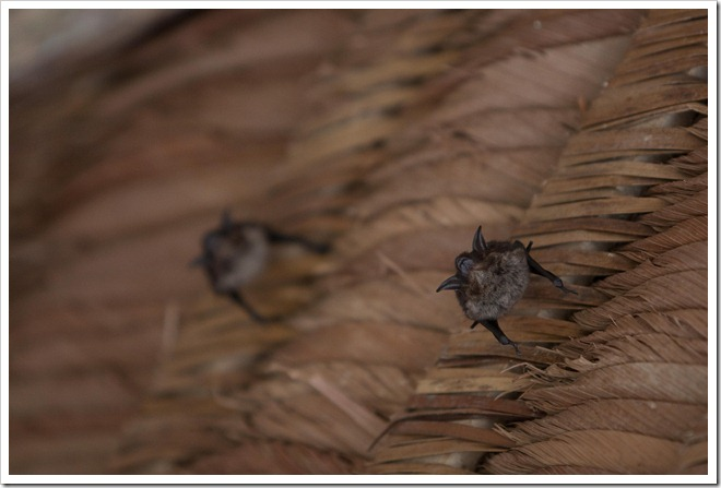 2010 03 16 15 53 Costa Rica_