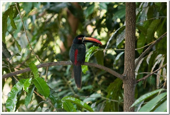 2010 03 18 21 18 Costa Rica_-8