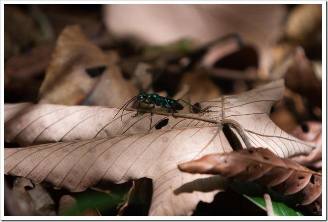 20100322 1629 Costa Rica