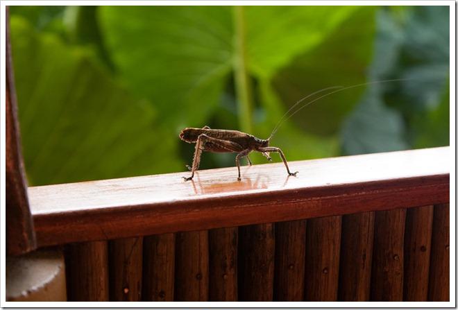 2010 03 19 14 02 Costa Rica_
