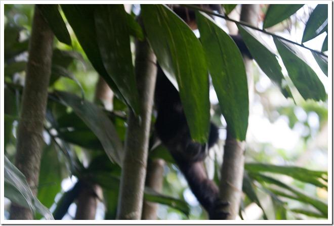 2010 03 19 15 00 Costa Rica_