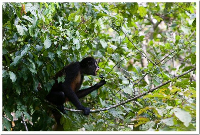 2010 March 22 Monkeys_-11