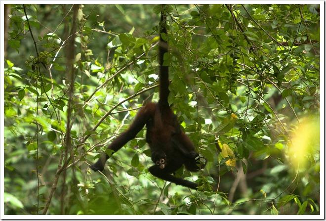 2010 March 22 Monkeys_