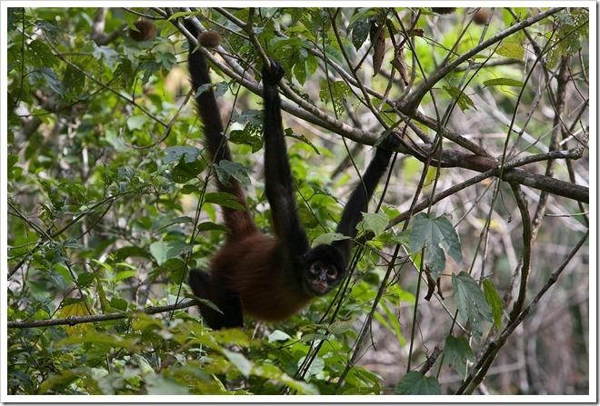 2010 March 22 Monkeys_-24