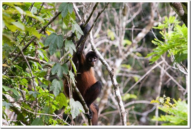 2010 March 22 Monkeys_-26