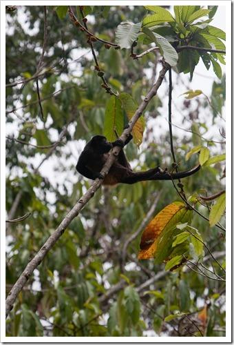 2010 March 22 Monkeys_-48