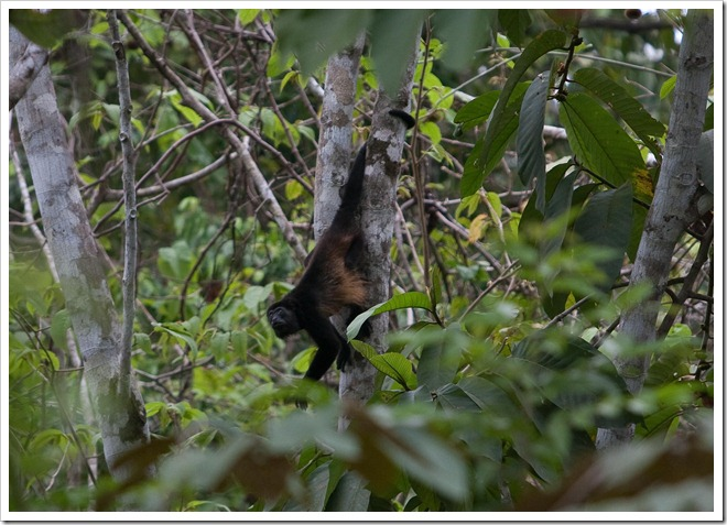 2010 March 22 Monkeys_-53