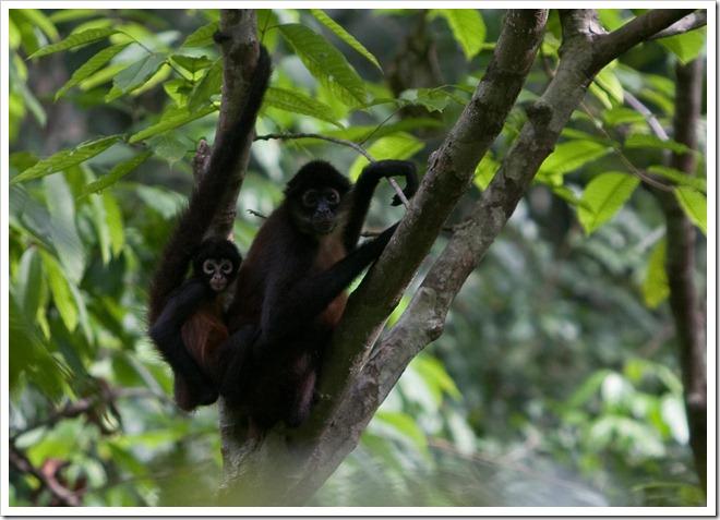 2010 March 22 Monkeys_-7