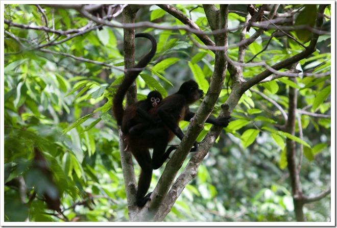 2010 March 22 Monkeys_-8