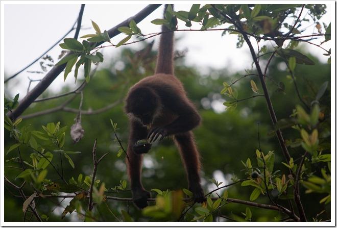 2010 March 22 Monkeys_-92