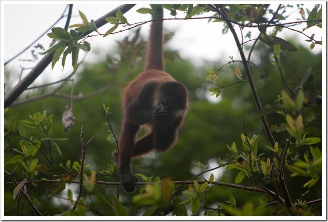 2010 March 22 Monkeys_-94