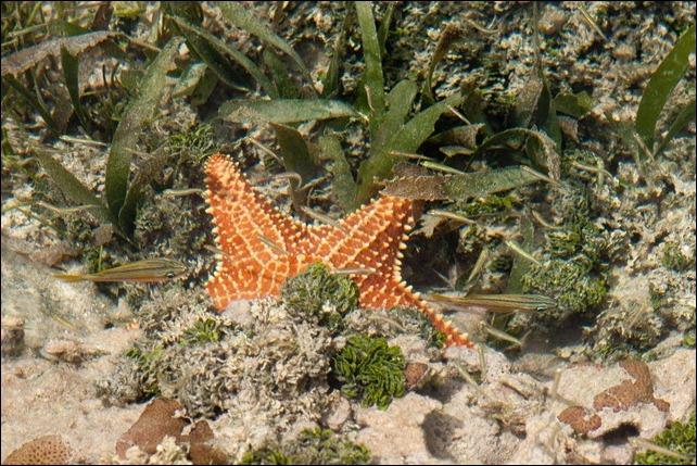 2011 03 18_-27 Starfish