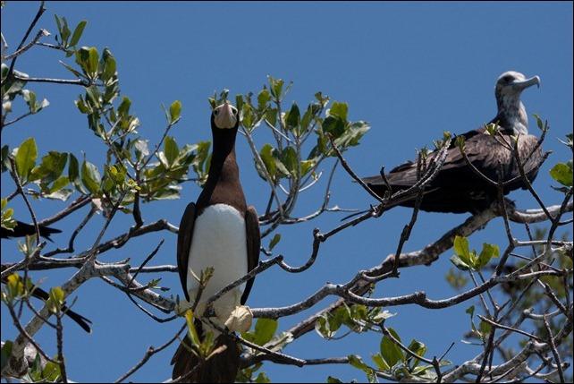 2011 03 18 Bird Island-31