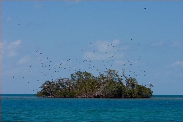 2011 03 18 Bird Island