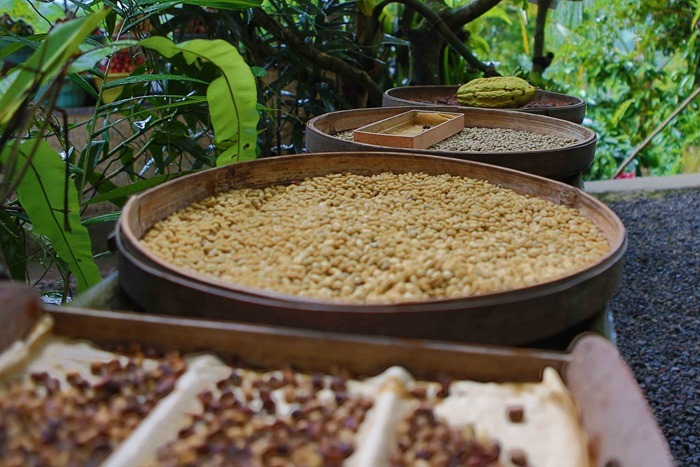 2013 03 24 Luwak Civet Coffee _-71