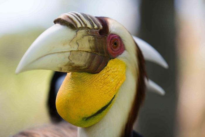 2013 03 25 Bali Bird Park   _-41