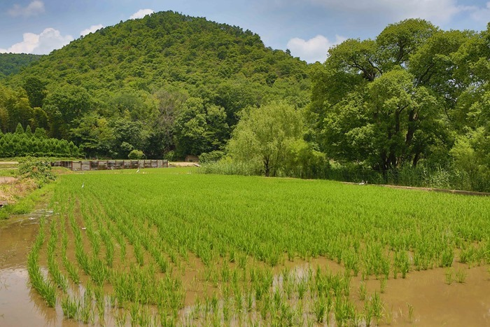 2013 06 17 Kyoto fields _-7