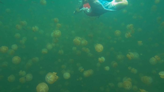 2013 07 29 Jellyfish lake Palau_-49
