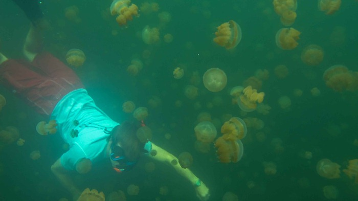 2013 07 29 Jellyfish lake Palau_-63
