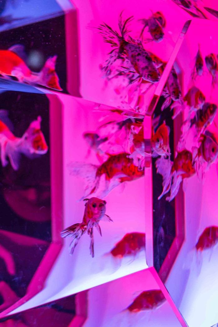 2013 08 23 Art aquarium_-19