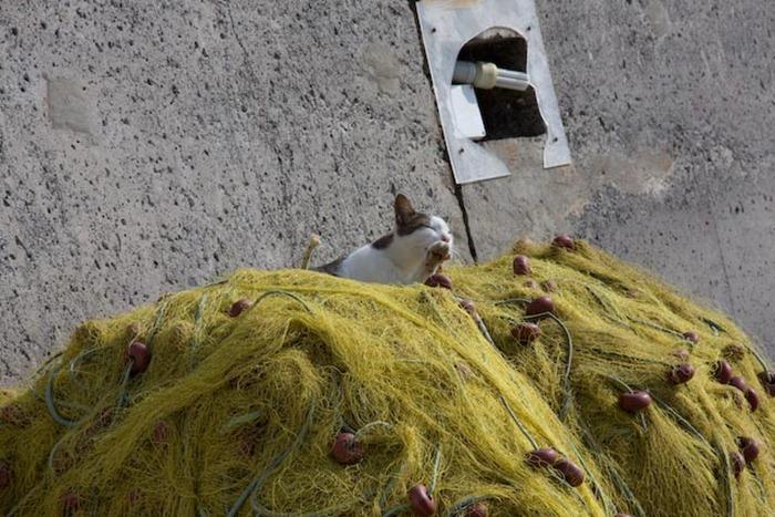 2008 Oct 23 Plaka Crete  (39)