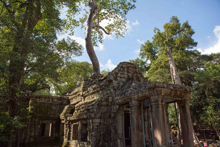 The Overgrown Temple Ta Prohm Michael Weening A Few