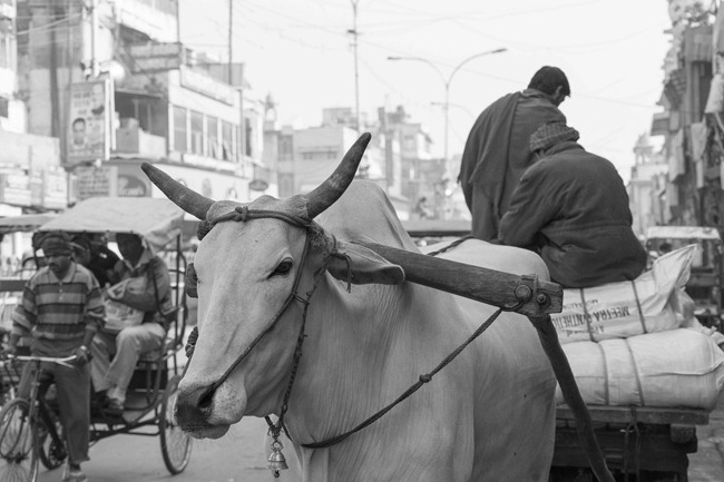 2013 12 24 Old Delhi-67-2