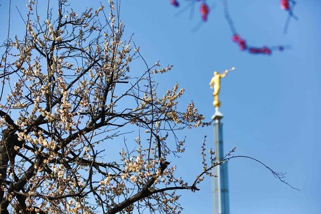 2014 02 22 Tokyo flowers_-2