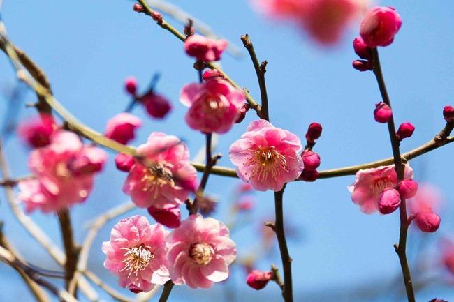 2014 02 22 Tokyo flowers_-3
