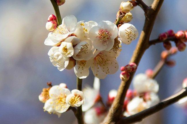 2014 02 22 Tokyo flowers_-4
