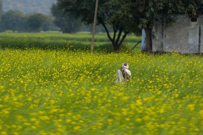 2013 12 27 Agra to Jaipur_-44