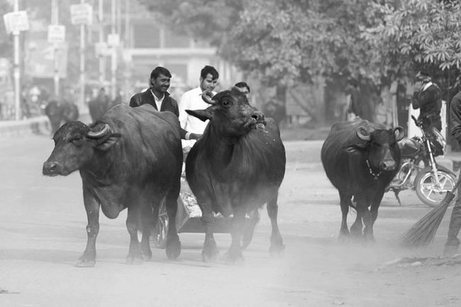 2013 12 27 Agra to Jaipur_