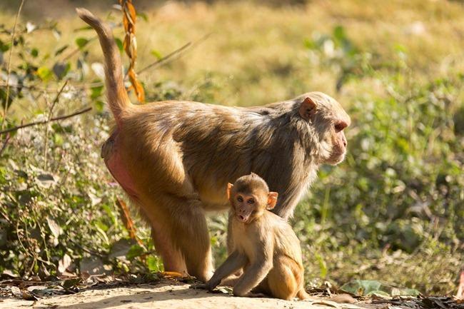 2013 12 26 monkeys_-32