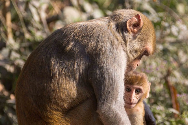 2013 12 26 monkeys_-36