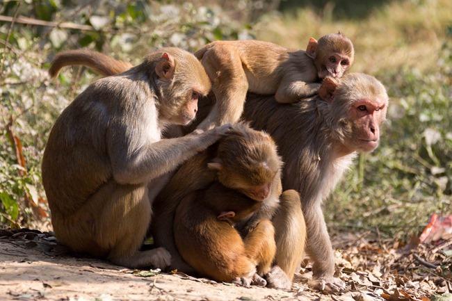 2013 12 26 monkeys_-41