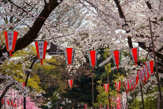 2014 04 01 Sakura_-51
