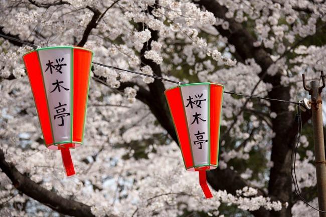 2014 04 01 Sakura_-55
