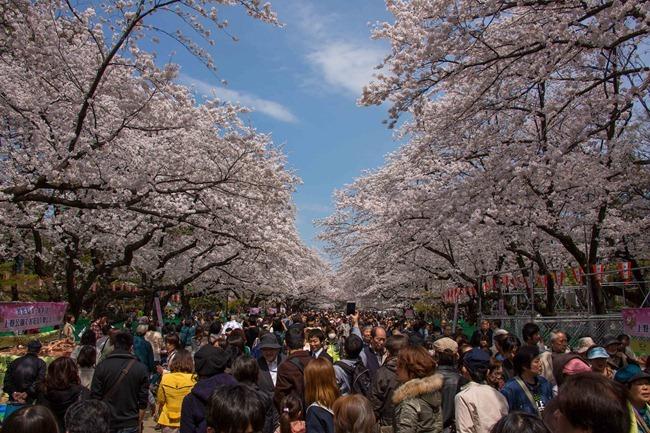 2014 04 01 Sakura_-67
