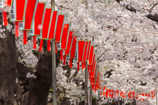 2014 04 01 Sakura_-71