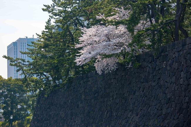 2014 04 01 Sakura_-82