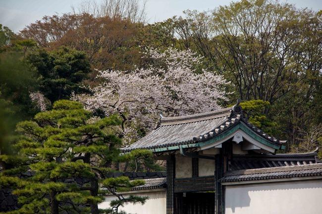 2014 04 01 Sakura_-85