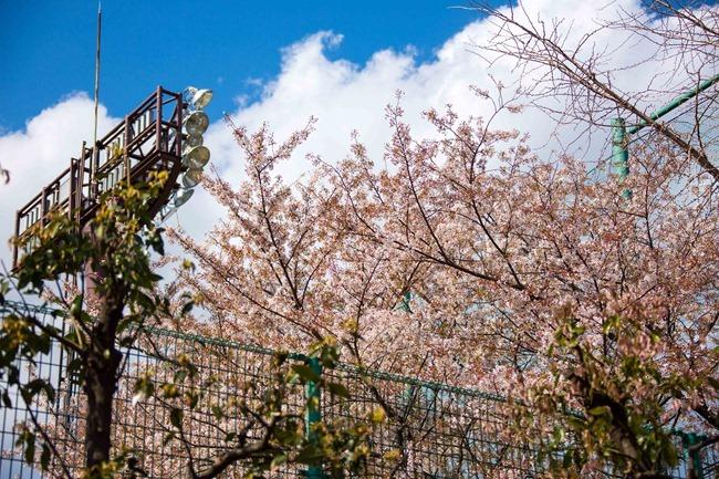2014 04 05 Sakura_-28