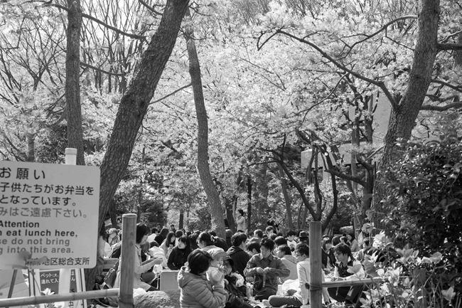 2014 04 05 Sakura_-31
