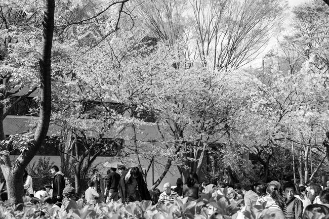 2014 04 05 Sakura_-32