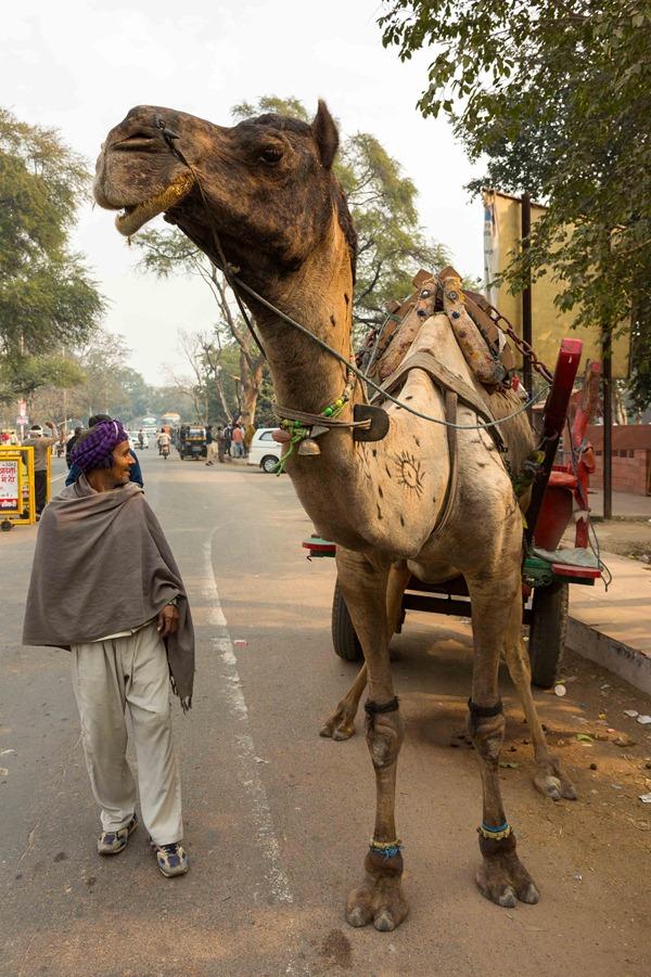 2013 12 27 Fatepur Sikri