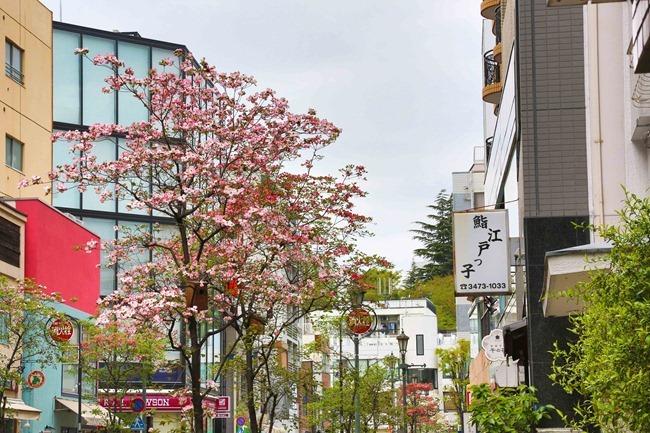 2014 04 20 Hiroo_-6