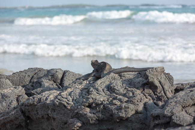2015 03 12 Isabela beach_-69